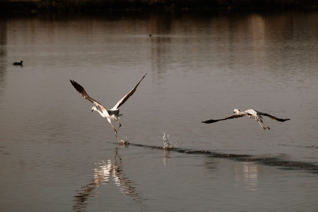 Explore the Gialova Lagoon: A Bird Paradise 4