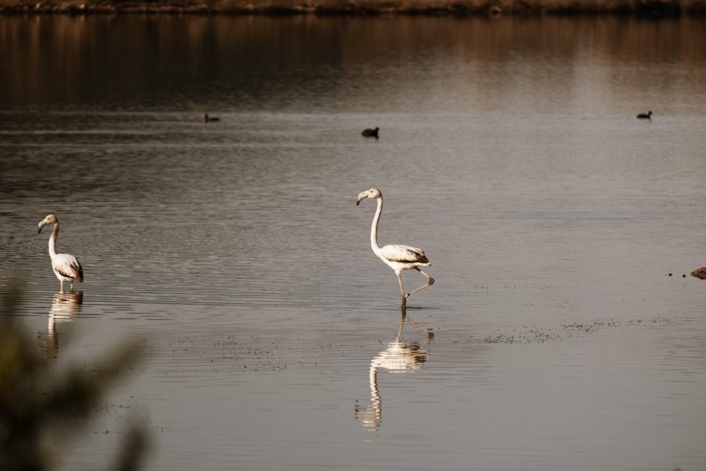 Explore the Gialova Lagoon: A Bird Paradise 3